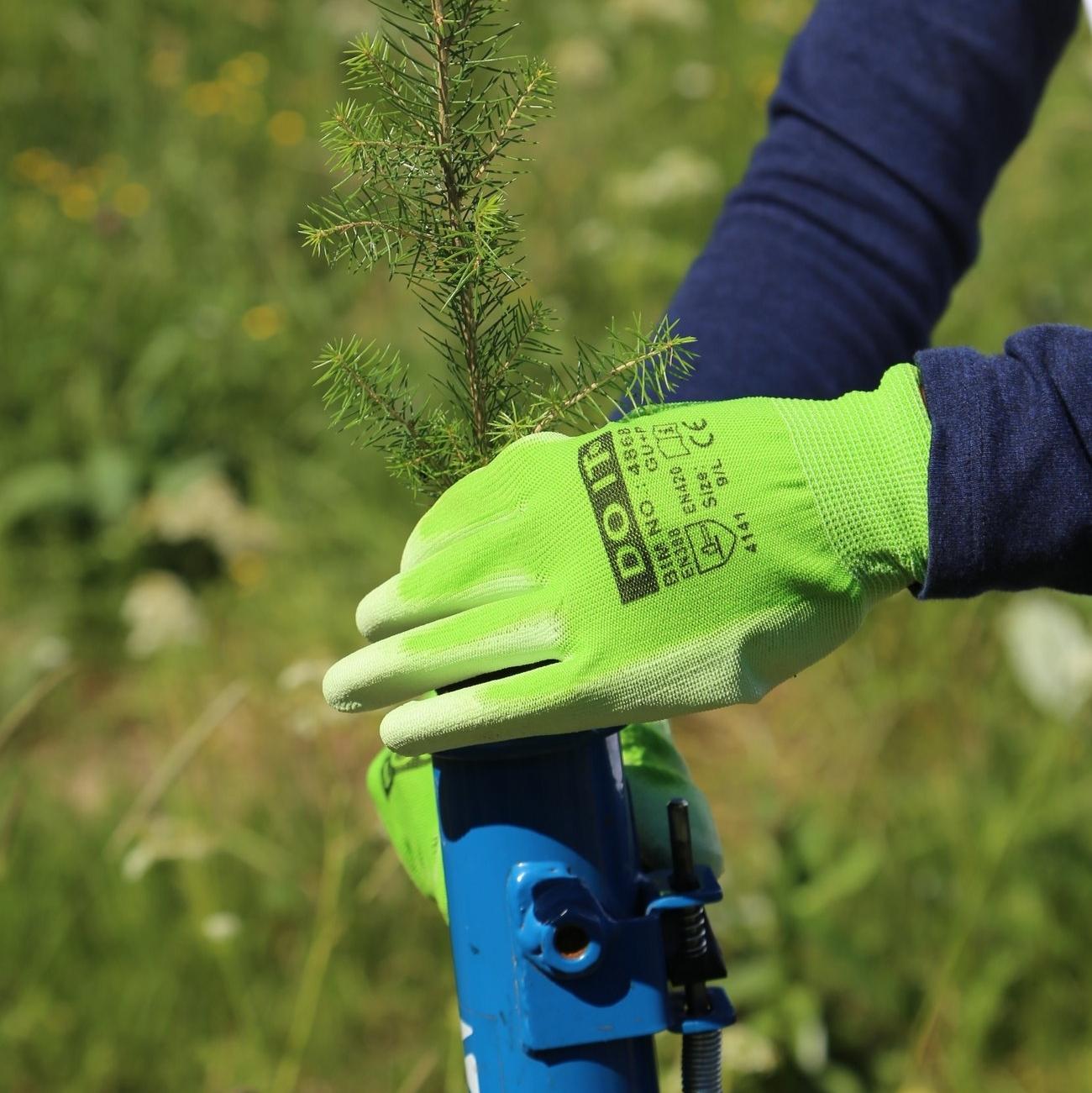 Istuttaja pudottaa taimea pottiputkeen hanskat kädessä ja pitkähihainen paita päällä