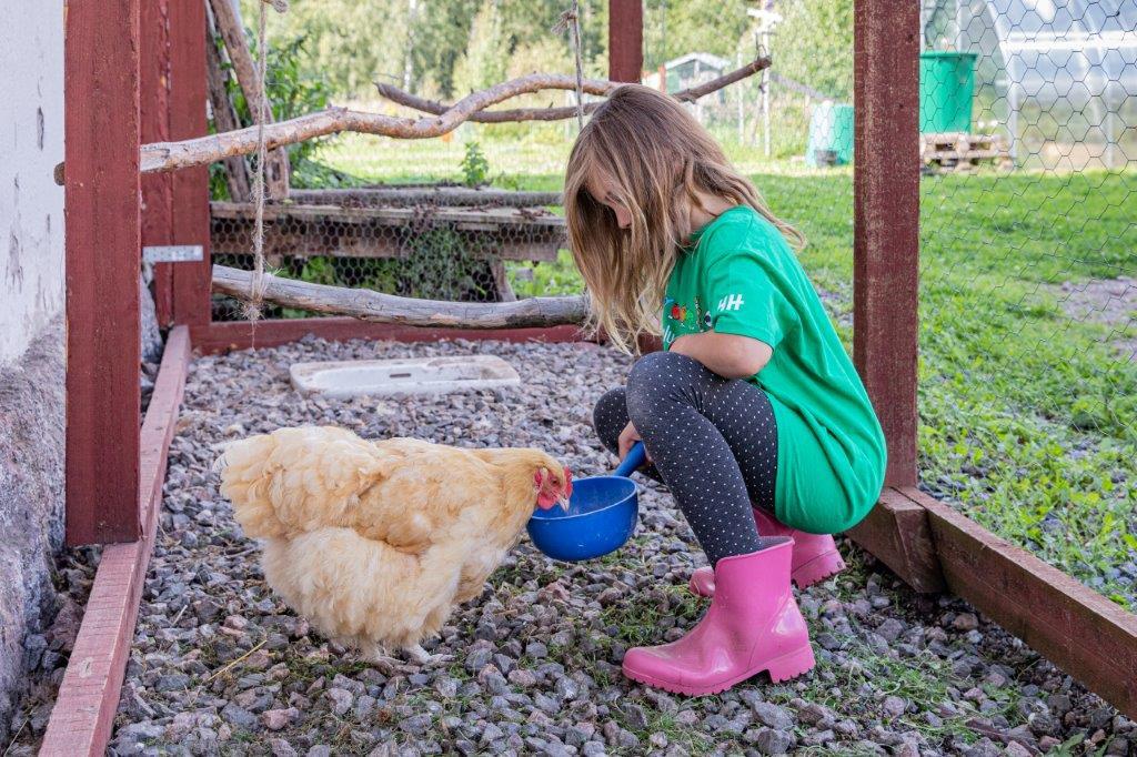 Lapsi juottaa kanaa sinisestä kauhasta